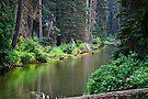 American River by Tori Snow
