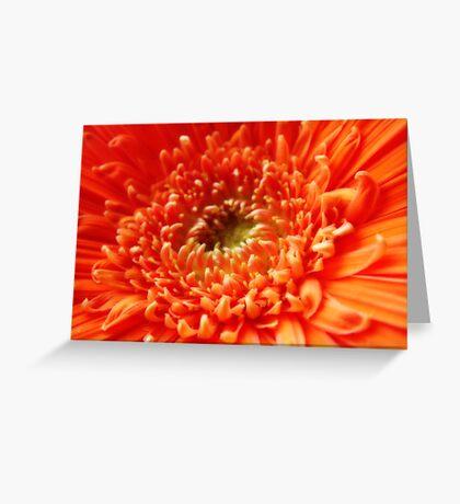 Orange Gerbera ~ The Orton Effect ~ Greeting Card