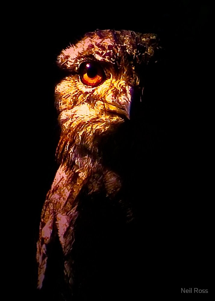 Tawny Frogmouth - The Nightjar (2009) by Neil Ross