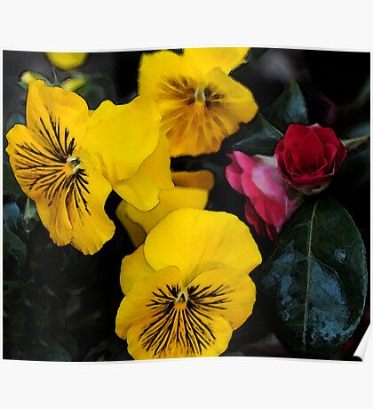 Yellow Pansies Poster