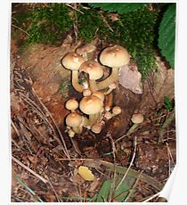 group of mushrooms Poster