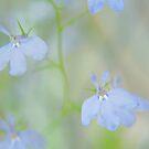 Trailing Lilac by Stephanie Hillson