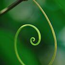 Curly Q by Beth Mason