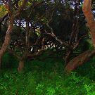 Gnarled Trees  by Wayne King