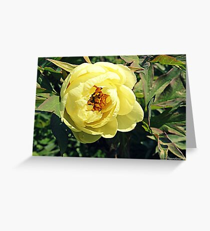 Yellow Tree Peony Greeting Card
