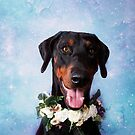 """THE DOBERMANN PROJECT"" 