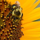 Bee and Sunflower by Richard Skoropat