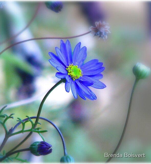 ~ Misty Blue Morn ~ by Brenda Boisvert