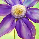 Daisy Jane by Kimberly Langlois