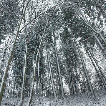 Communicating with trees by masarukishino