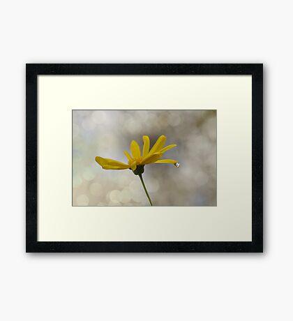 You Brighten My Day  Framed Print