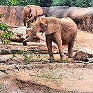 «En el zoológico observando a los elefantes» de Scott Mitchell