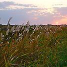 Sunset, Grassland, Hokkaido, Japan. by johnrf