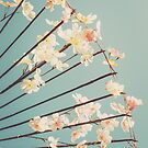 Cherry Blossoms by Pascal Deckarm