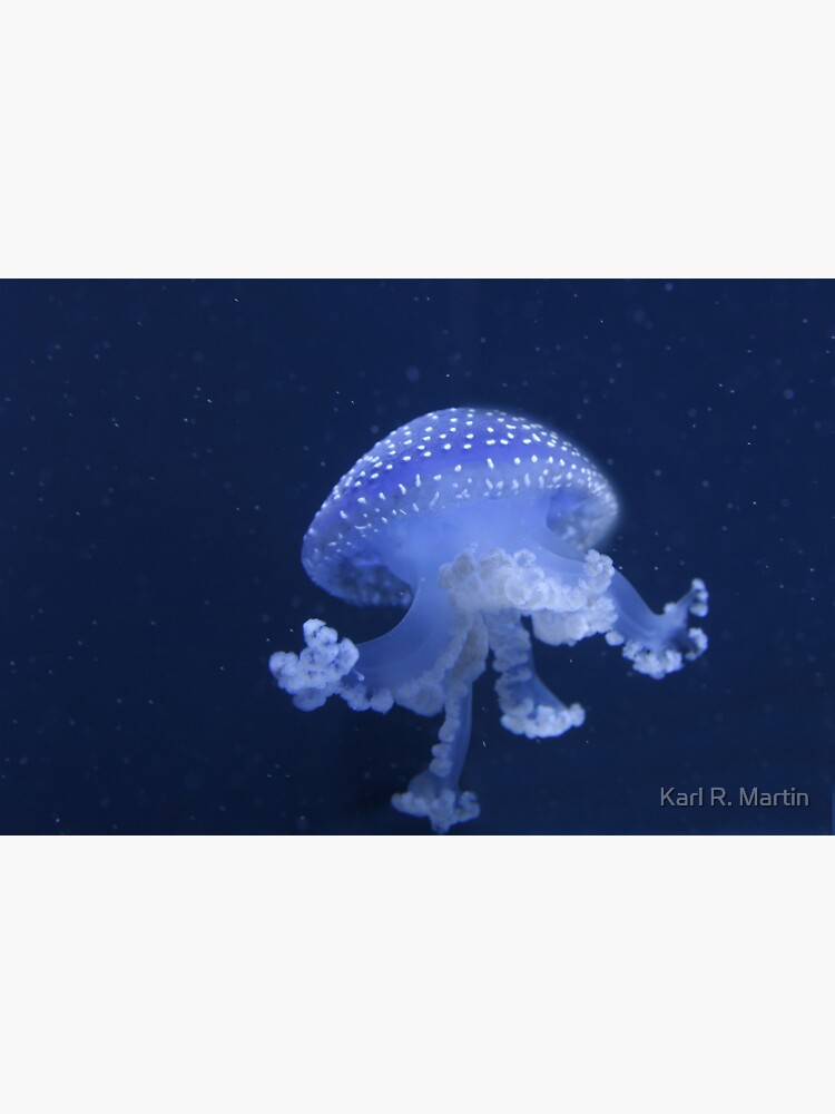 Blue Jellyfish by SirEagle