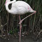 Pink Flamingo by Karl R. Martin