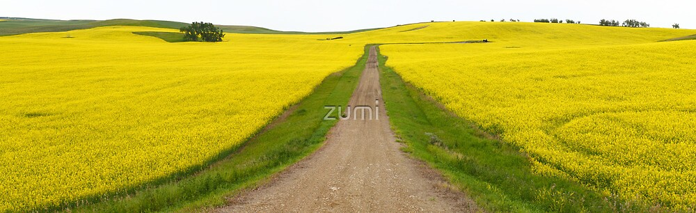 Canola fields by zumi