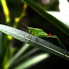 Baby grasshopper  by Earl McCall