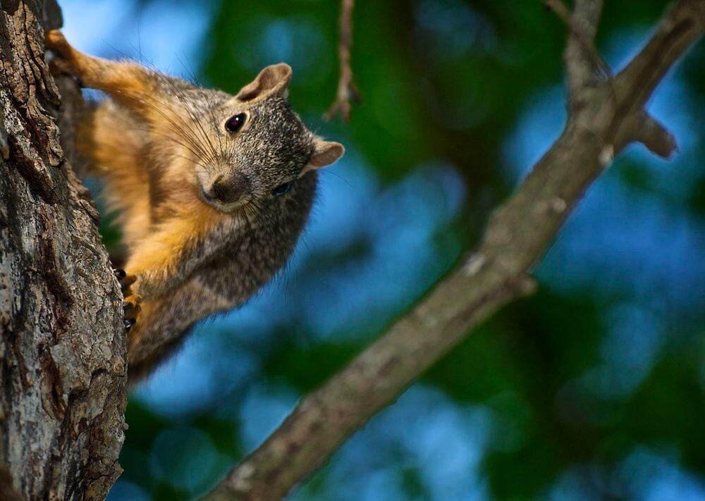 Peek-A-Boo around the tree by Ann Reece