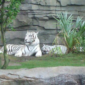 white tigers by xxnatbxx
