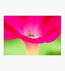 attracting by pink Photographic Print