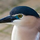Nankeen Night Heron by Peter Pevy