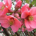 « Les beautés du printemps » par Ana Belaj