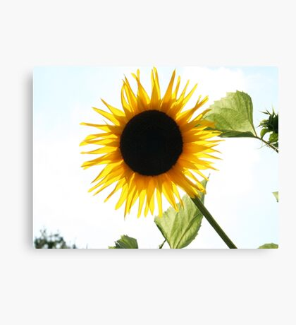 Total Eclipse of the Sun Canvas Print