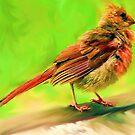 Colorful Juvenile Cardinal by DottieDees