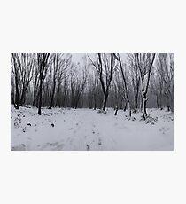 Into Narnia Photographic Print