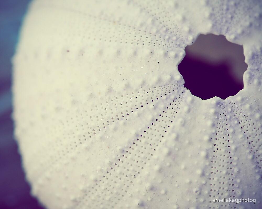 Sea Urchin by ameliakayphotog