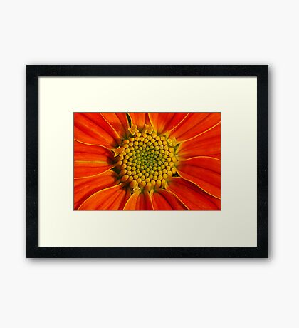 Center of Attraction Framed Print