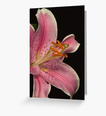Pink lilly - very close up Greeting Card