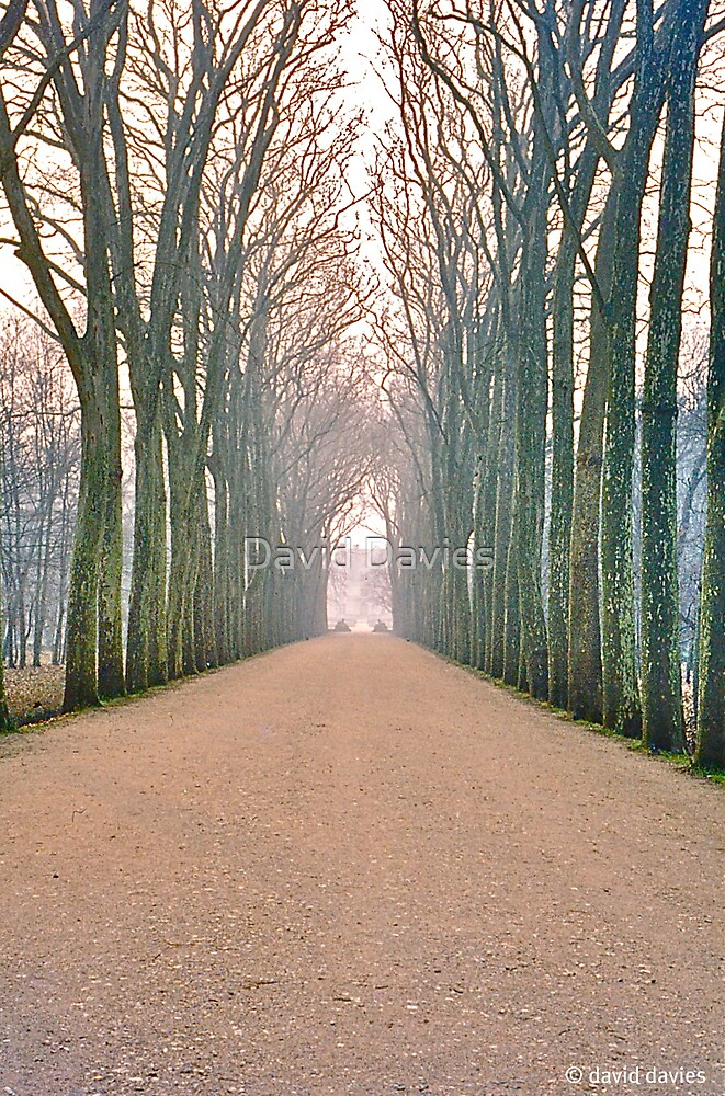 Chenonceau, the Avenue by David Davies