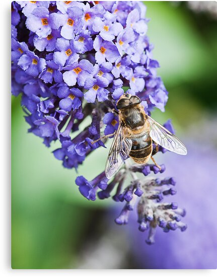 Wasp on Lilac tree by Elaine123