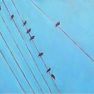 Birds Wires 13 by eolai