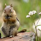 Baby Chip  by Betsy  Seeton