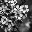 BW flowers by Kornrawiee