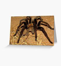 Arizona/Mexican Blonde Tarantula Greeting Card