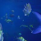Reef Fish by Michael Damanski
