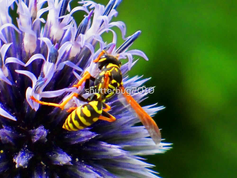 Pollen Patrol by shutterbug2010