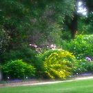 garden walk by leesm19