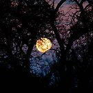 FULL MOON IN AFRICAN SILHOUETTE by Magriet Meintjes