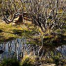 Devil's gullet wetlands by Mel Brackstone