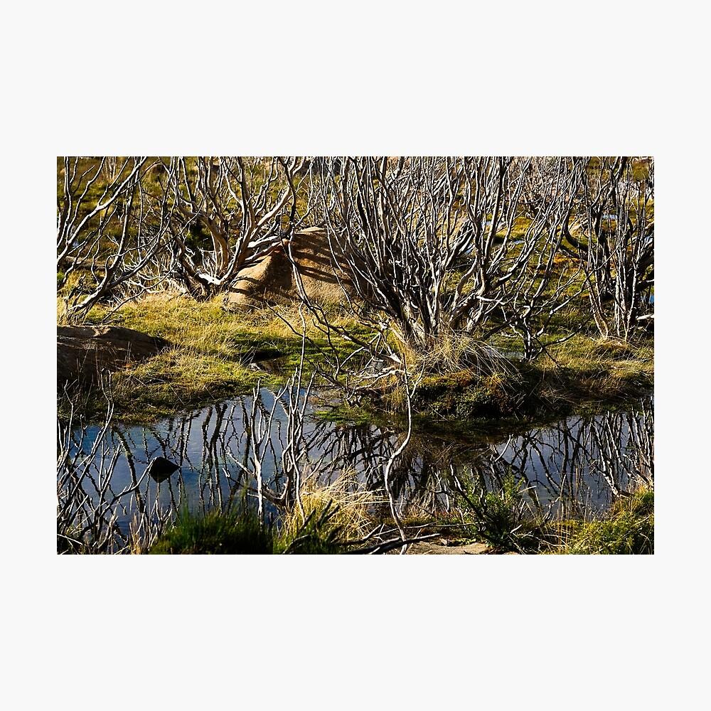 Devil's gullet wetlands Photographic Print
