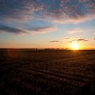 early morning field work, Streaky Bay, SA by tarnyacox