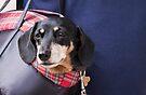 Doggie Bag by Ray Clarke