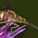 Pollen Time by Gareth Jones