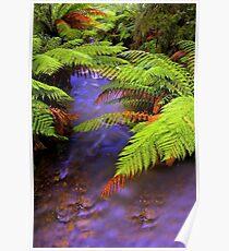 """Ferns~Creek"" Poster"