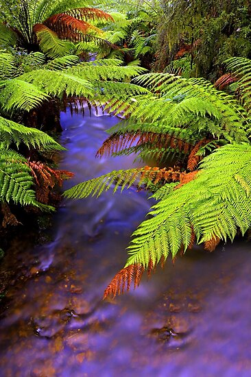 """Ferns~Creek"" by Husky"